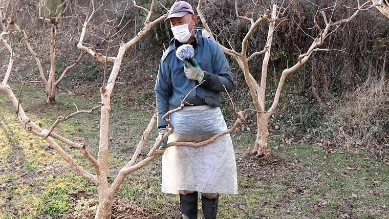 粗皮削り後の柿の木